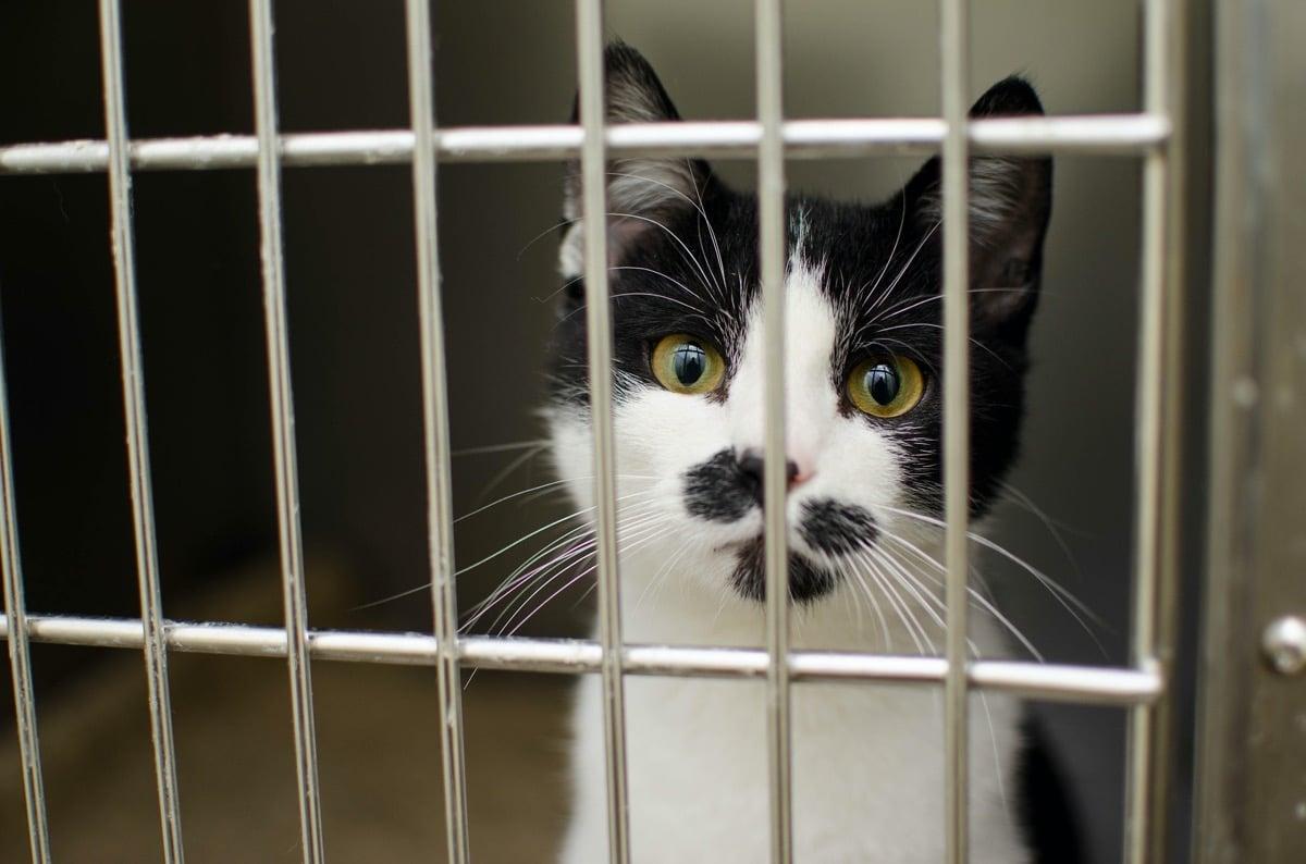 Lleva a tu gato al veterinario si sospechas que tiene ictericia