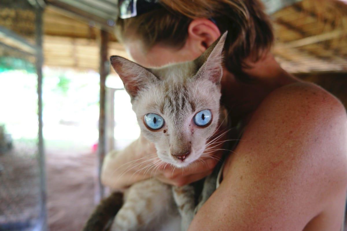 La ictericia en gatos es un síntoma grave