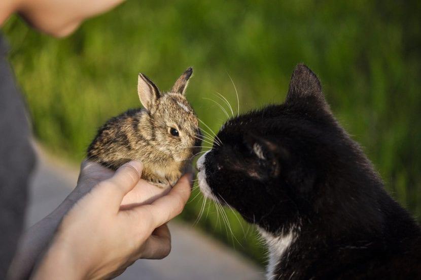 Gatos y conejos pueden llevarse bien