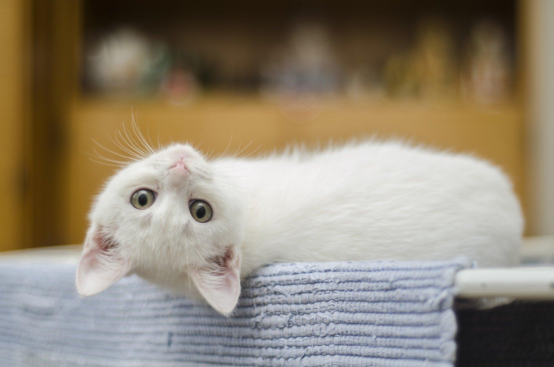 Los gatos comen varias veces al día