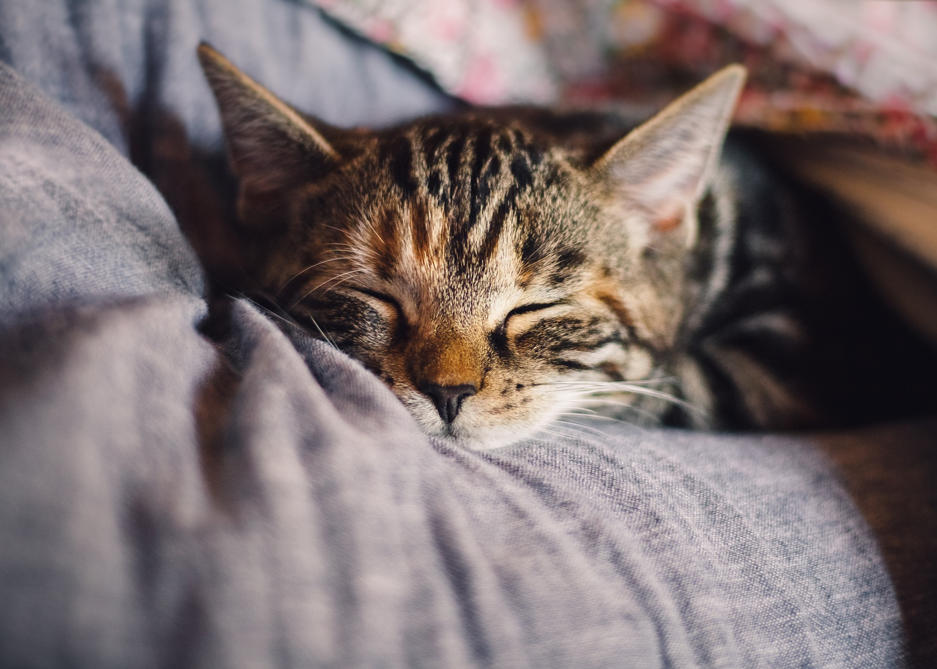 Los gatos buscan sitios agradables para dormir