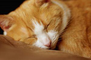 Si tu gato no quiere dormir contigo puede ser que tenga calor