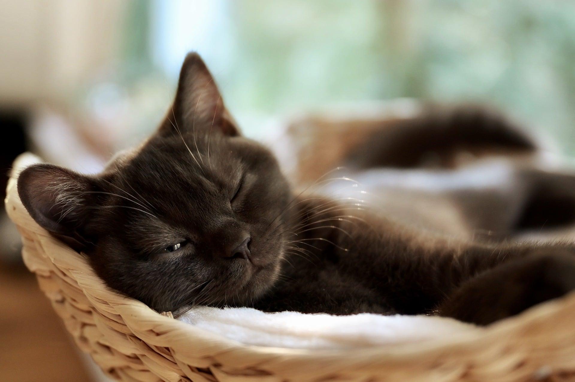 Los gatos duermen muchas horas