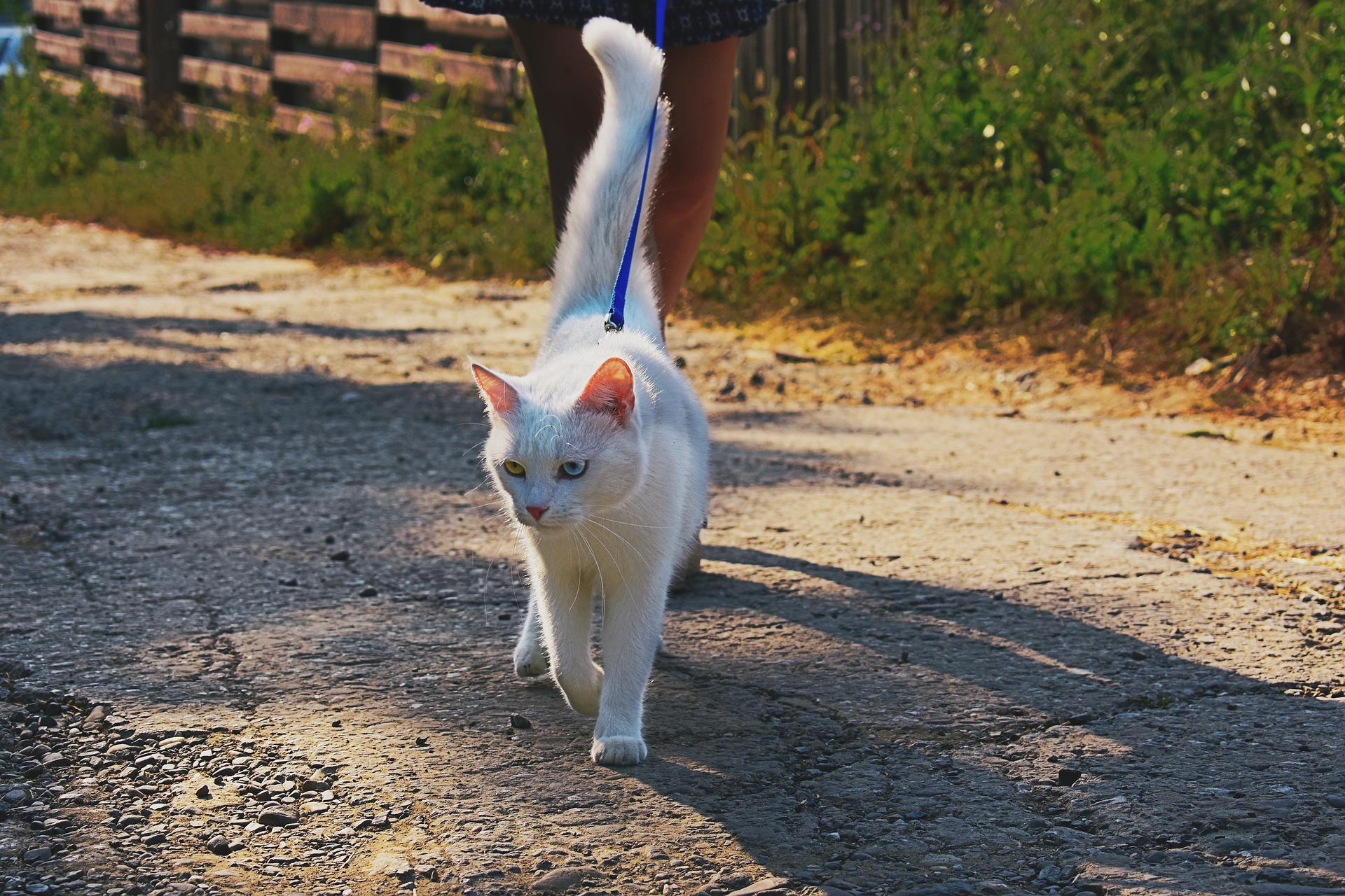 Los gatos disfrutan paseando, en la calle o en casa