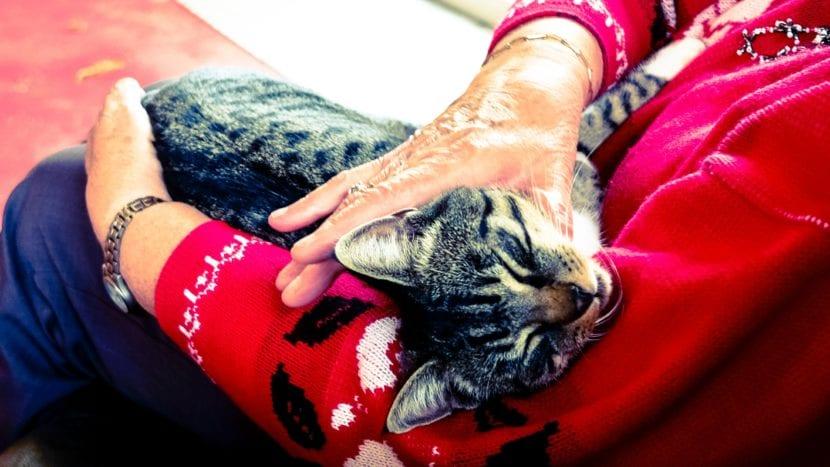 Los gatos pueden ser muy cariñosos