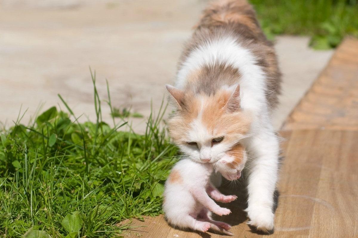 mama gata aparta gatito