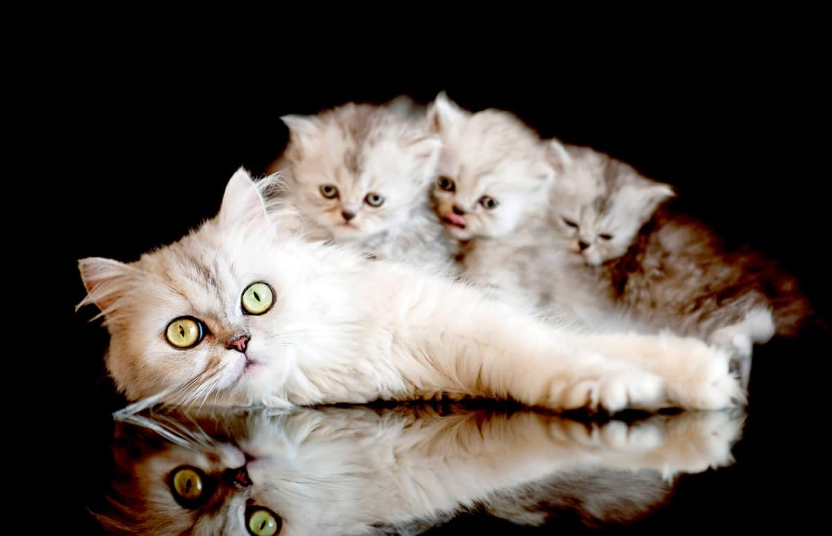 mama gata y sus crias pequeñas