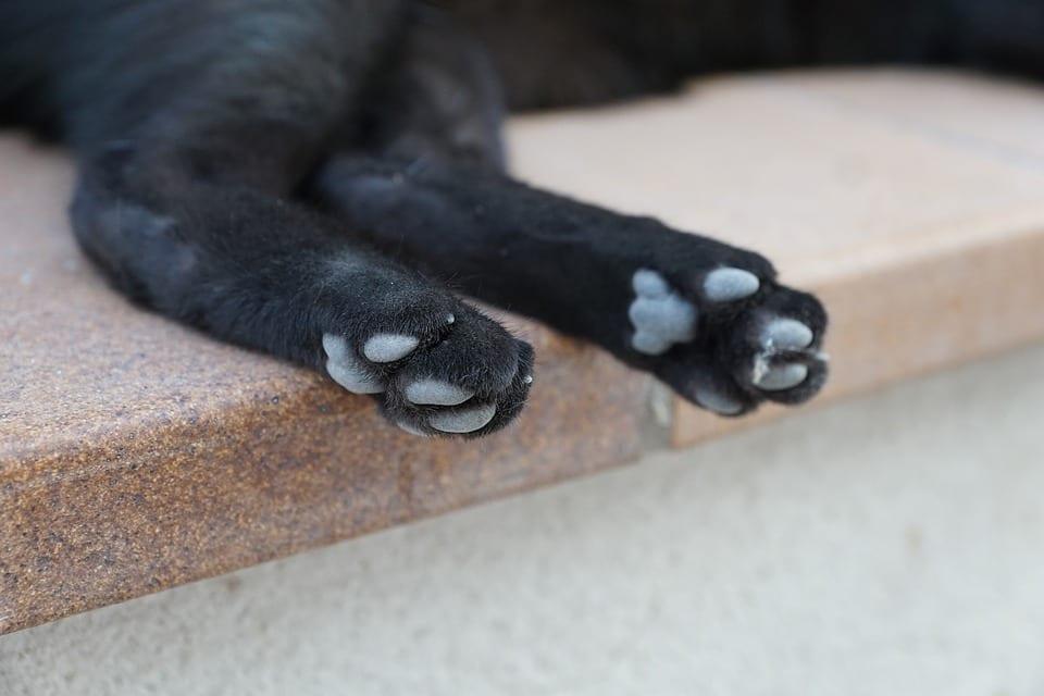 Patas de un gato