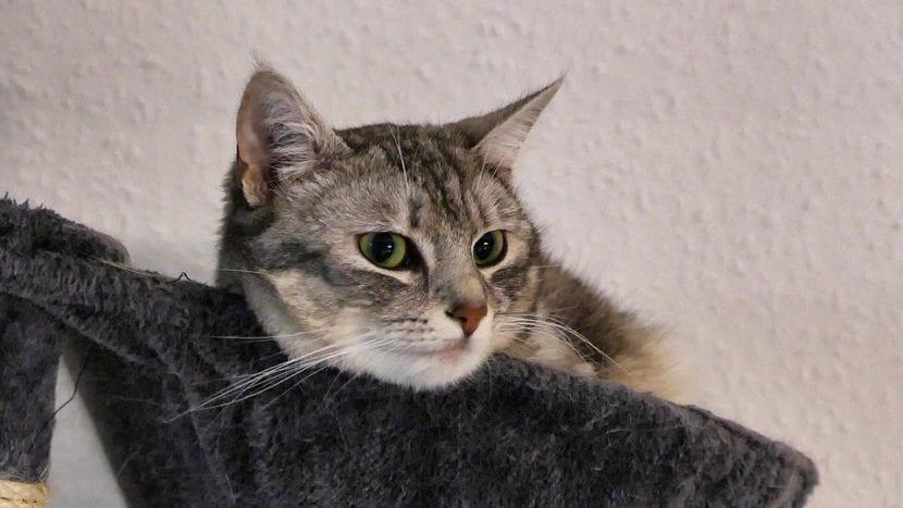 Gatito en el rascador