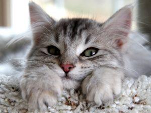Los gatos pueden predecir cosas