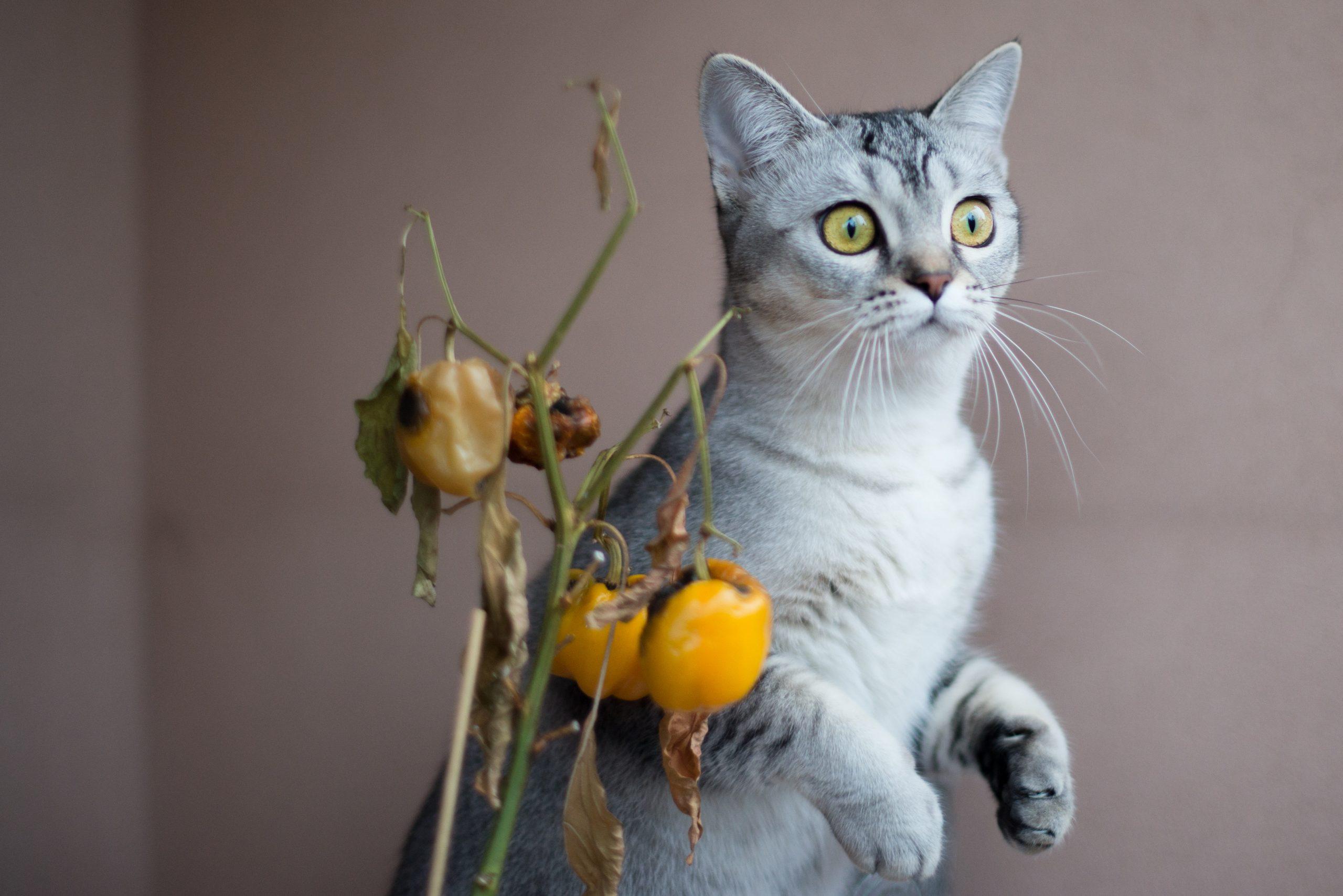 Los gatos son muy inteligentes