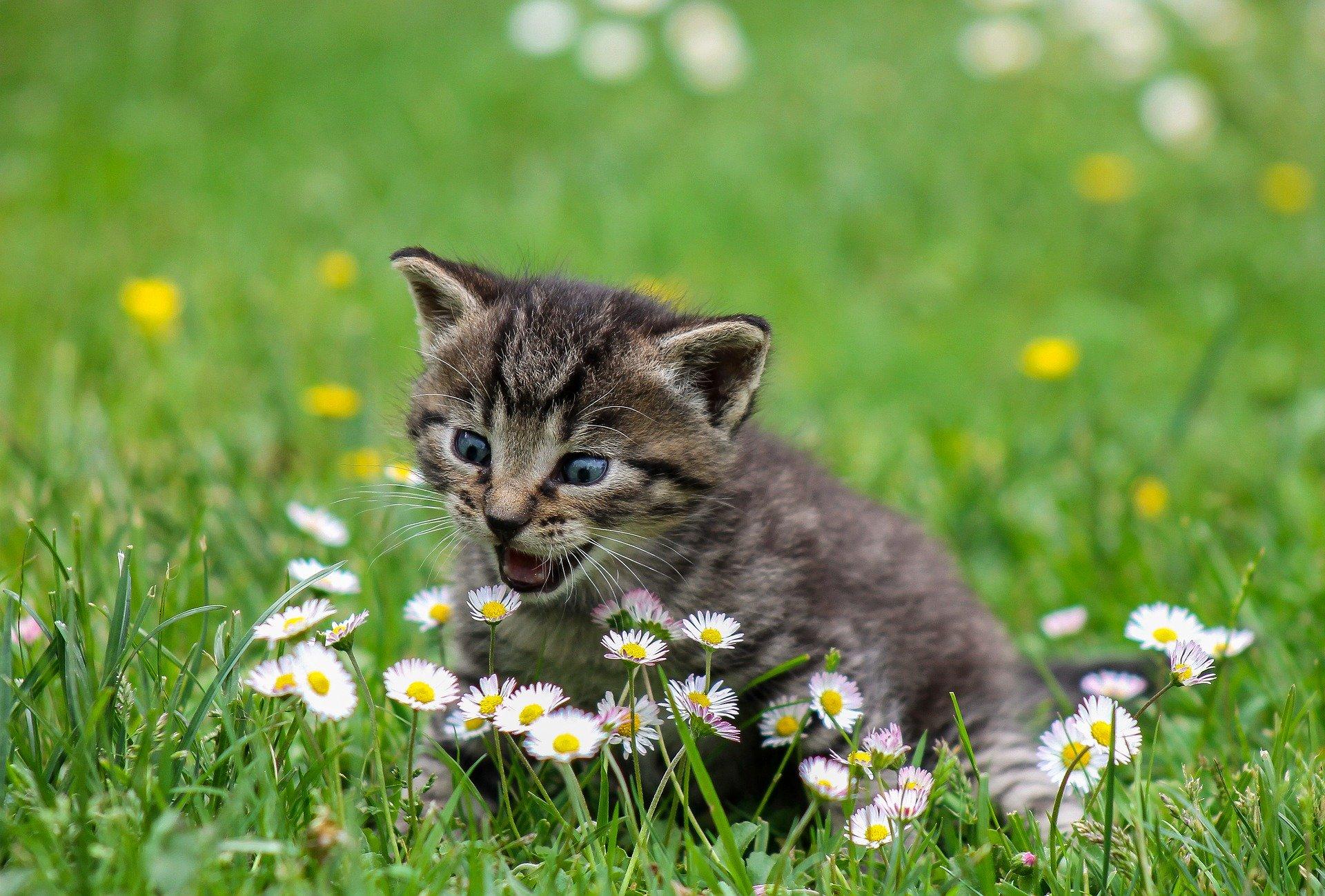 gato pequeño asustado de 4 meses o menos, en flores