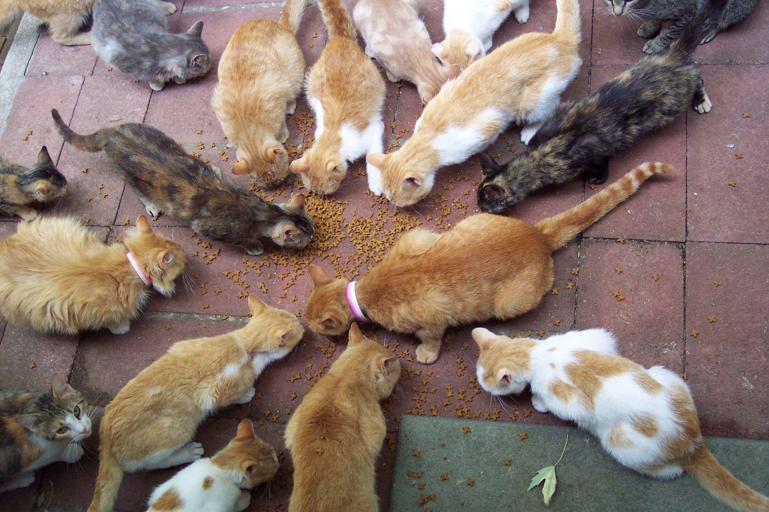 Hay gatos que tienen la suerte de vivir en grupos muy grandes