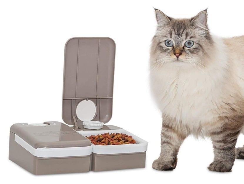 Modelo de comedero automático para gatos