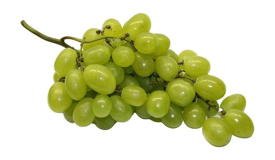 Las uvas son tóxicas para los gatos