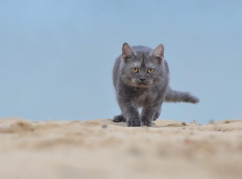 Gato joven en una playa