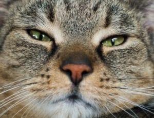 Cara de gato triste
