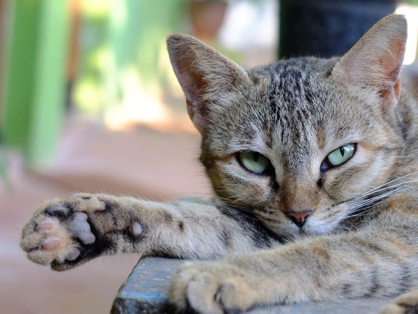 Gato en la India