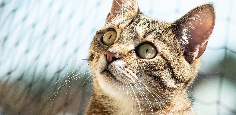 Si tu gato vomita, llévalo al veterinario