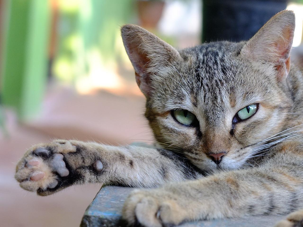 Encuentra el nombre mitológico para tu gato