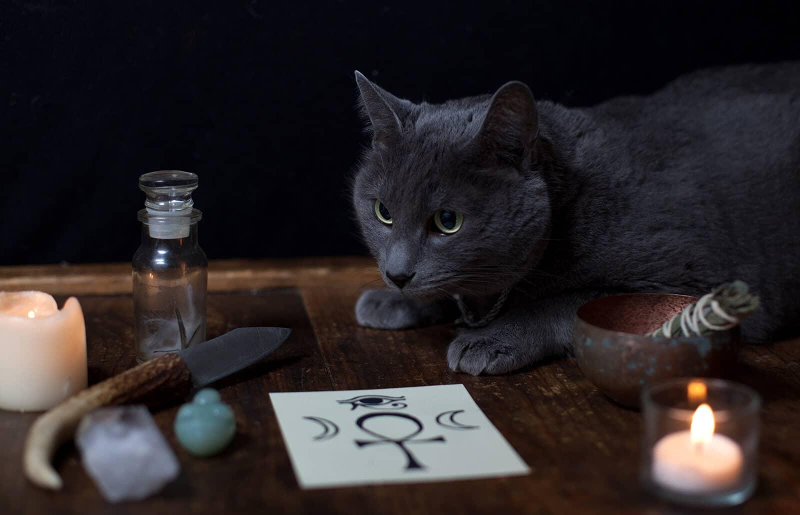 Los gatos son animales que pueden tener nombres mitológicos