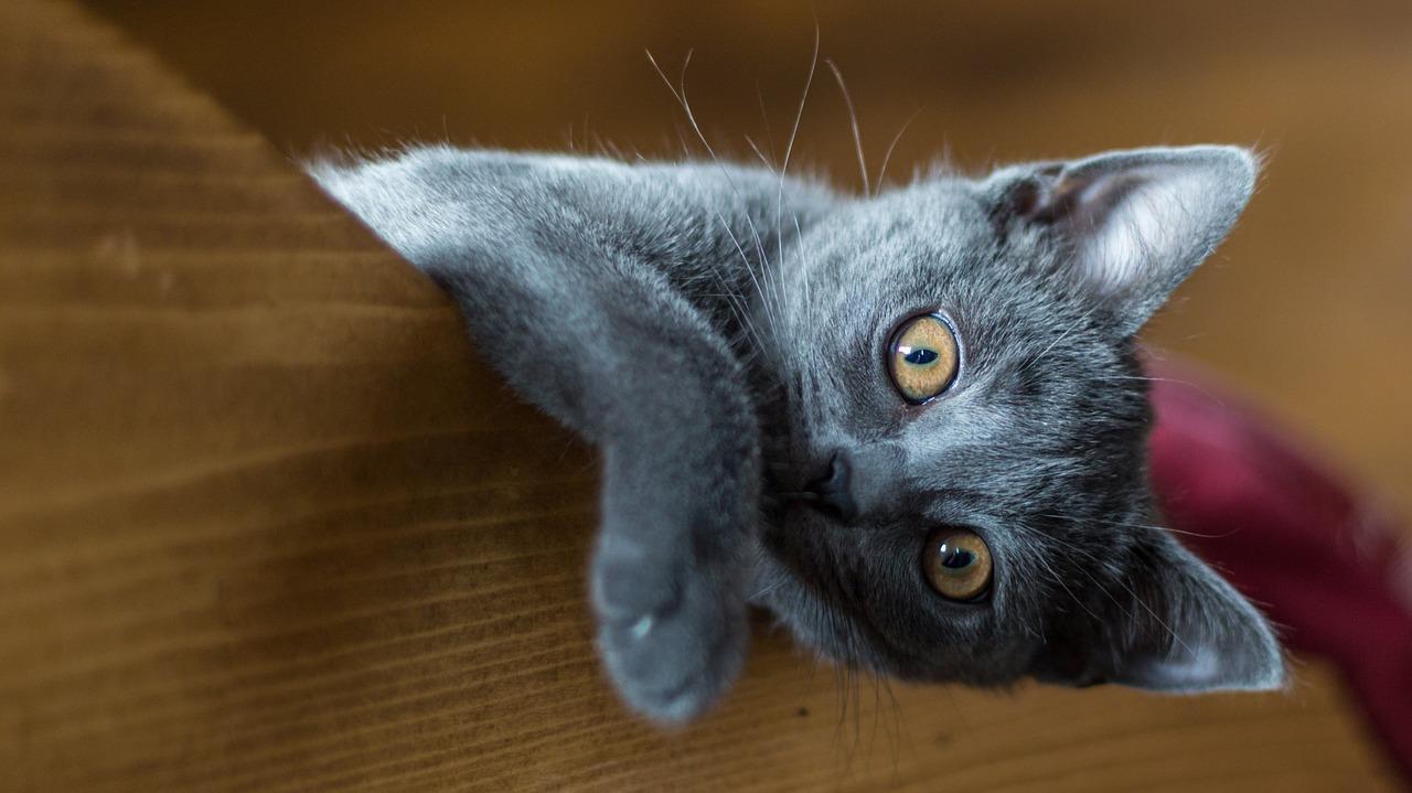 Si no sabes qué nombre ponerle a tu gato, ponle uno mitológico