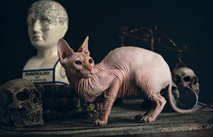 Le puedes poner un nombre mitológico a tu gato