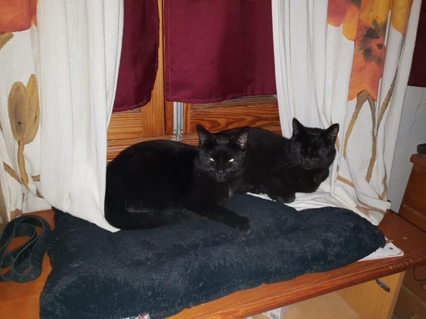 Bicho y Benji