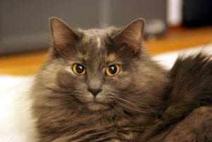 Gato con pupilas dilatadas