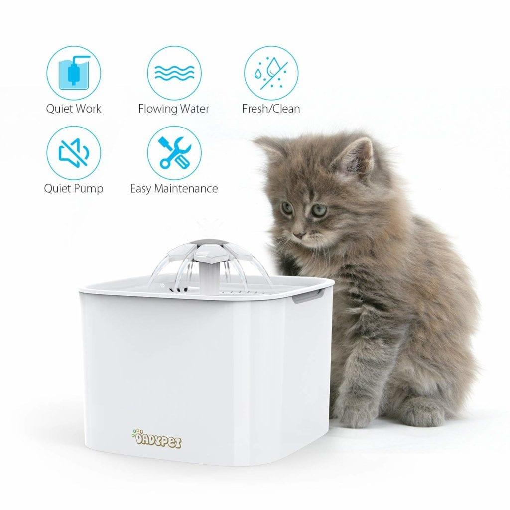 Aprende a elegir una fuente para tu gato