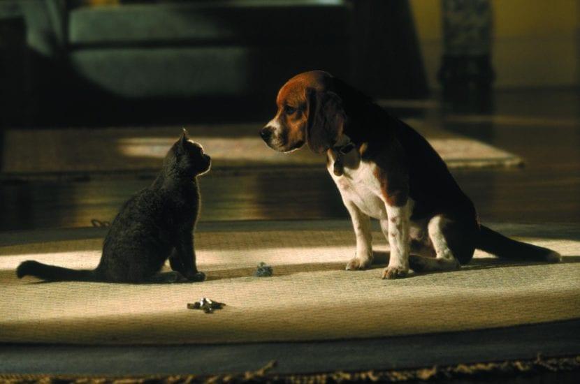Película Como perros y gatos