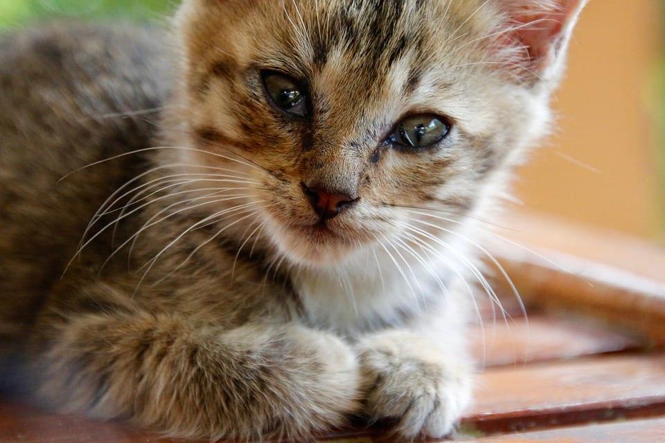 La alergia a los gatos es un problema serio