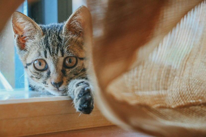 Escoge el mejor arenero para tu gato