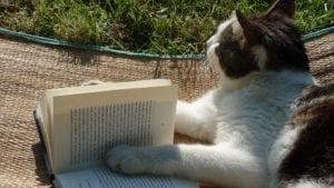 Gato con libro