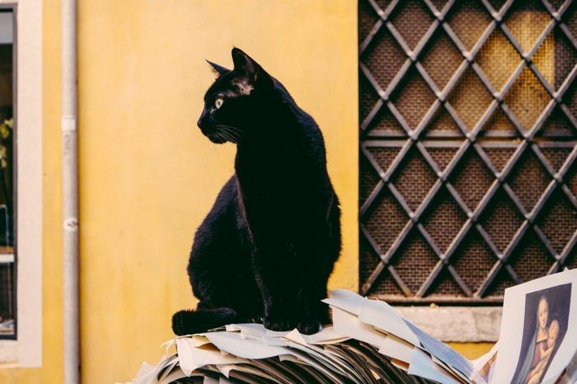 Los gatos que llevan GPS difícilmente se pierden