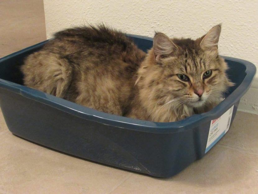 El arenero es un accesorio muy importante para el gato