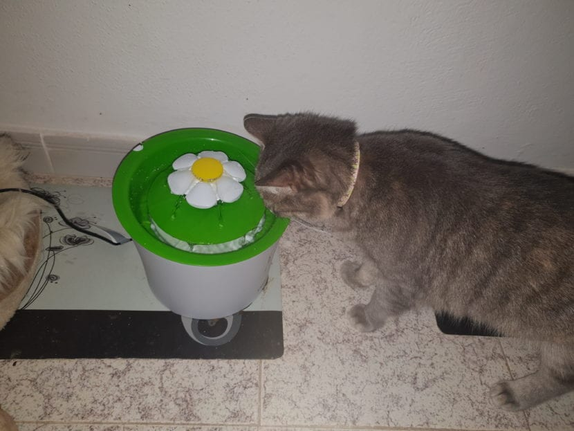 Mi gata Keisha bebiendo agua