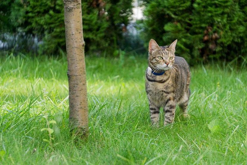 Un gato que sale al exterior debería llevar gps