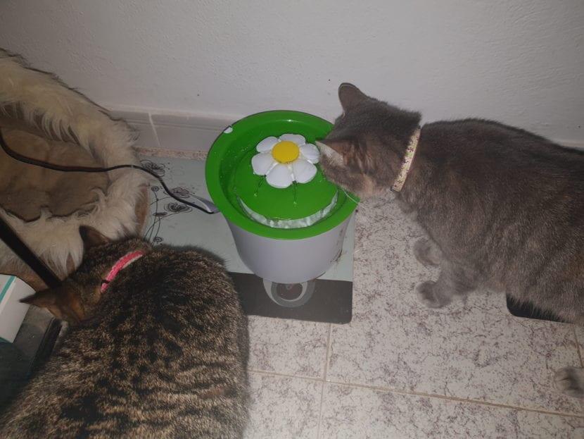 Mis gatas Sasha y Keisha
