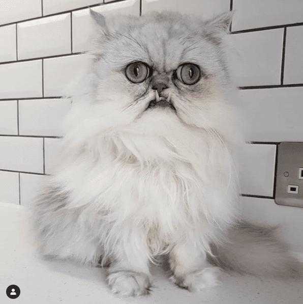 Wilfred, el gato