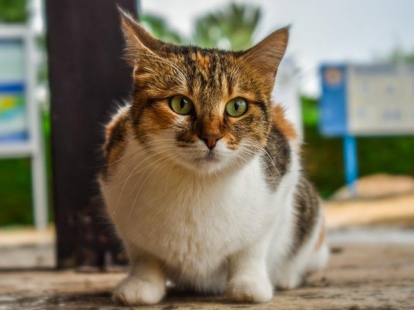 Los gatos que viven en la calle necesitan un sitio seguro donde dormir