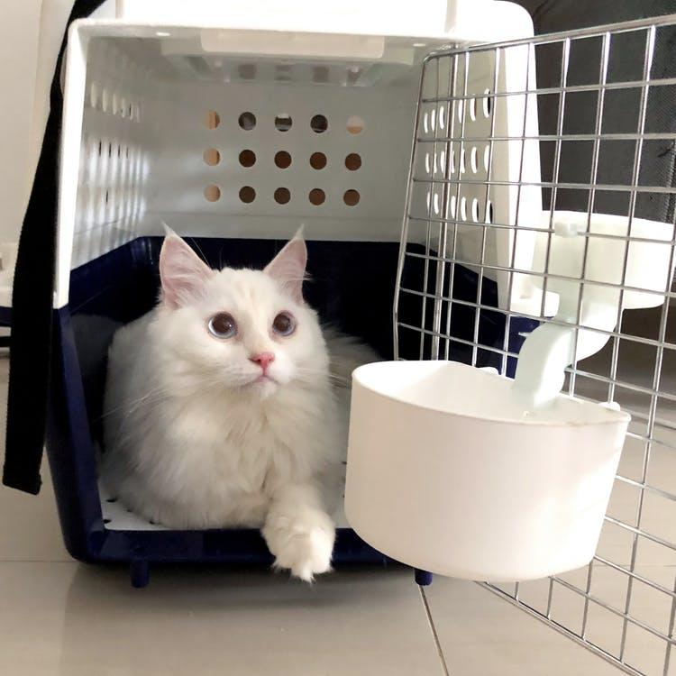 El transportin tiene que ser un refugio para el gato