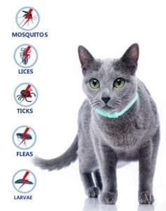 Modelo de collar antipulgas para gatos