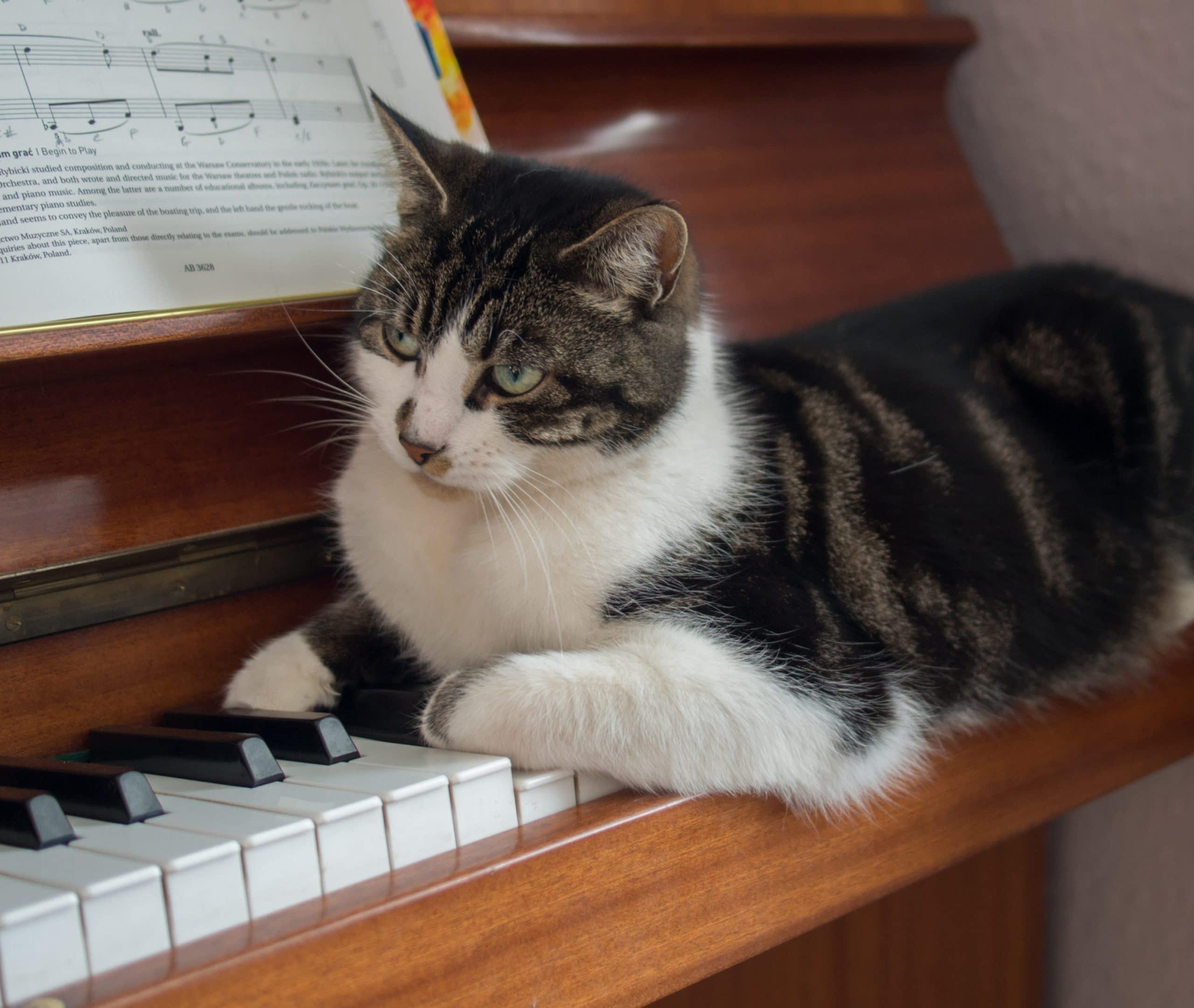 A los gatos les gusta la música clásica