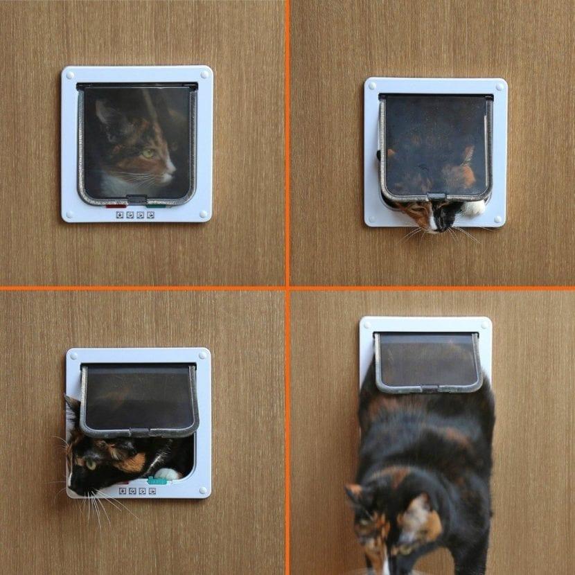 Cómo elegir una puerta para gatos