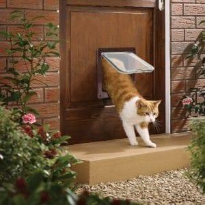 Los gatos salen mejor por puertas abatibles