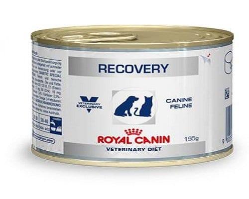 Royal Canin Recovery, para gatos débiles