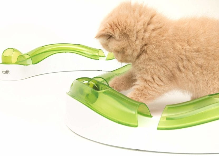 Gatito jugando con el circuito de Catit