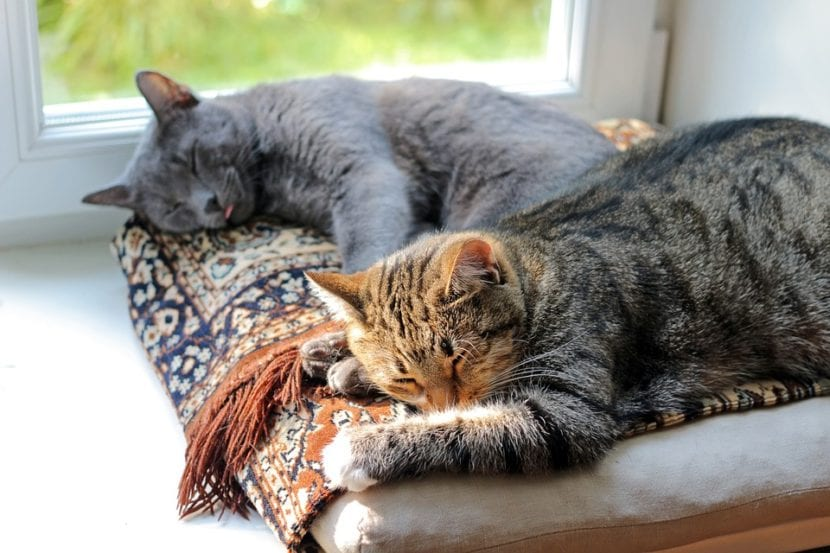 Los gatos duermen mucho