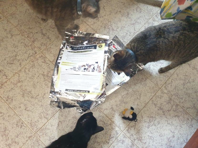 A los gatos les encanta el pienso